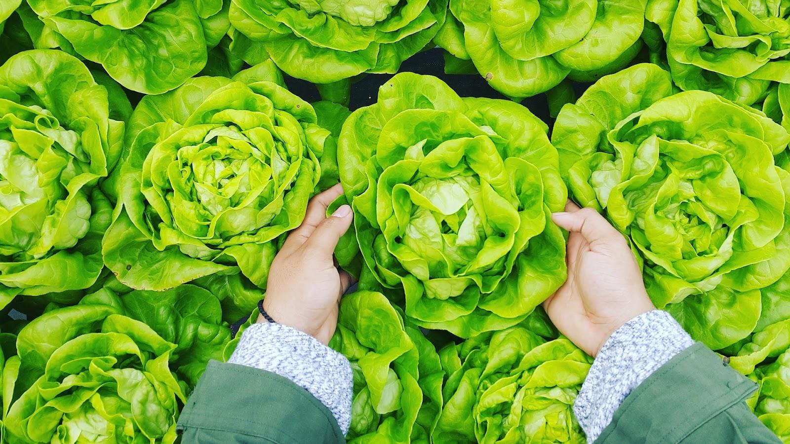 Wie lange ist salat im kühlschrank haltbar?