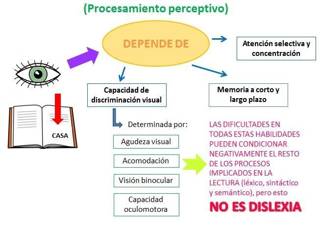 Macintosh HD:Users:raquel:Desktop:procesamiento perceptivo.jpg