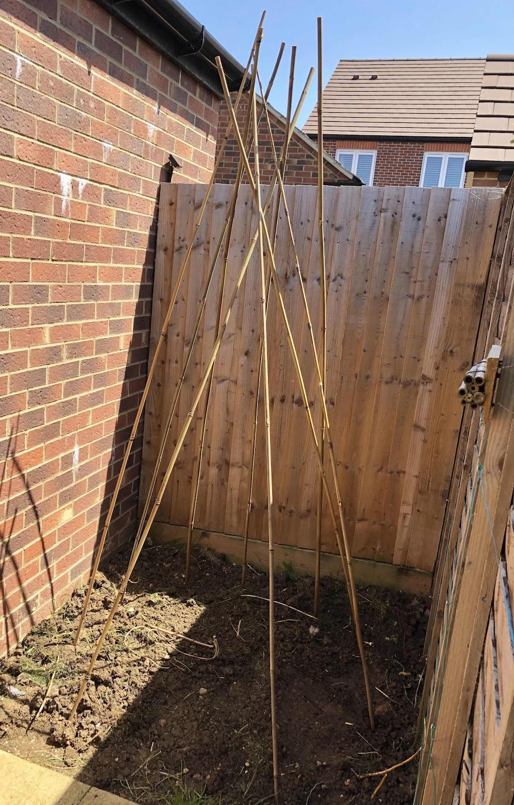 Half constructed garden teepee