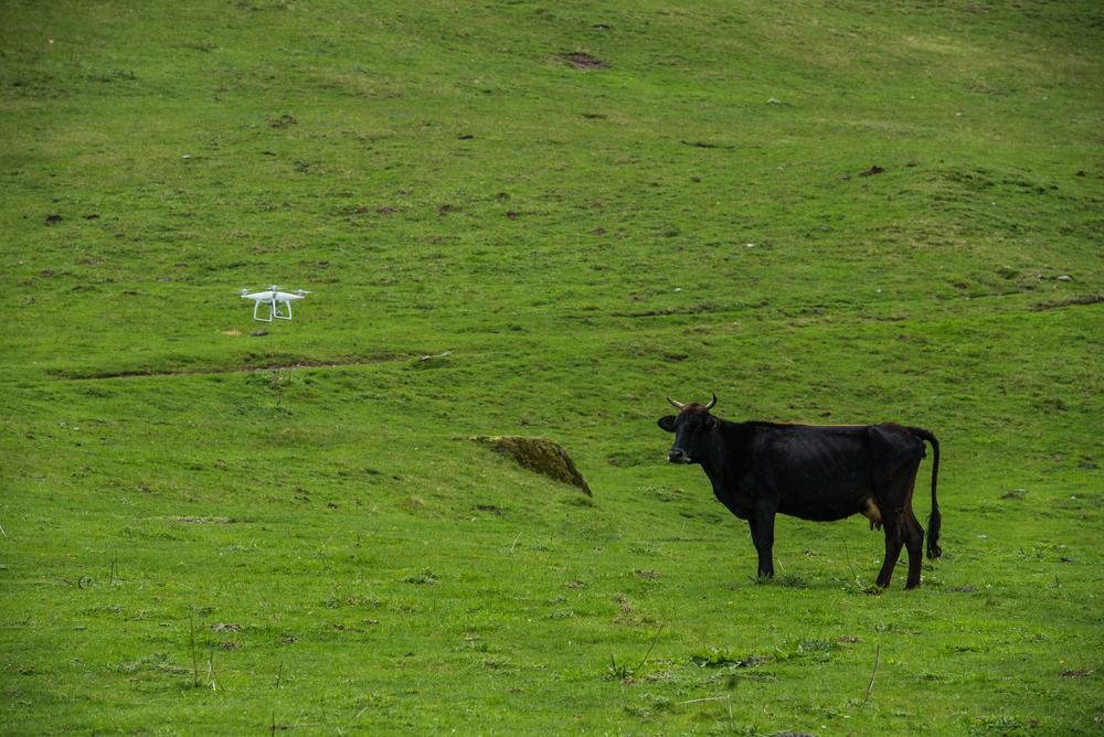 drone em pasto