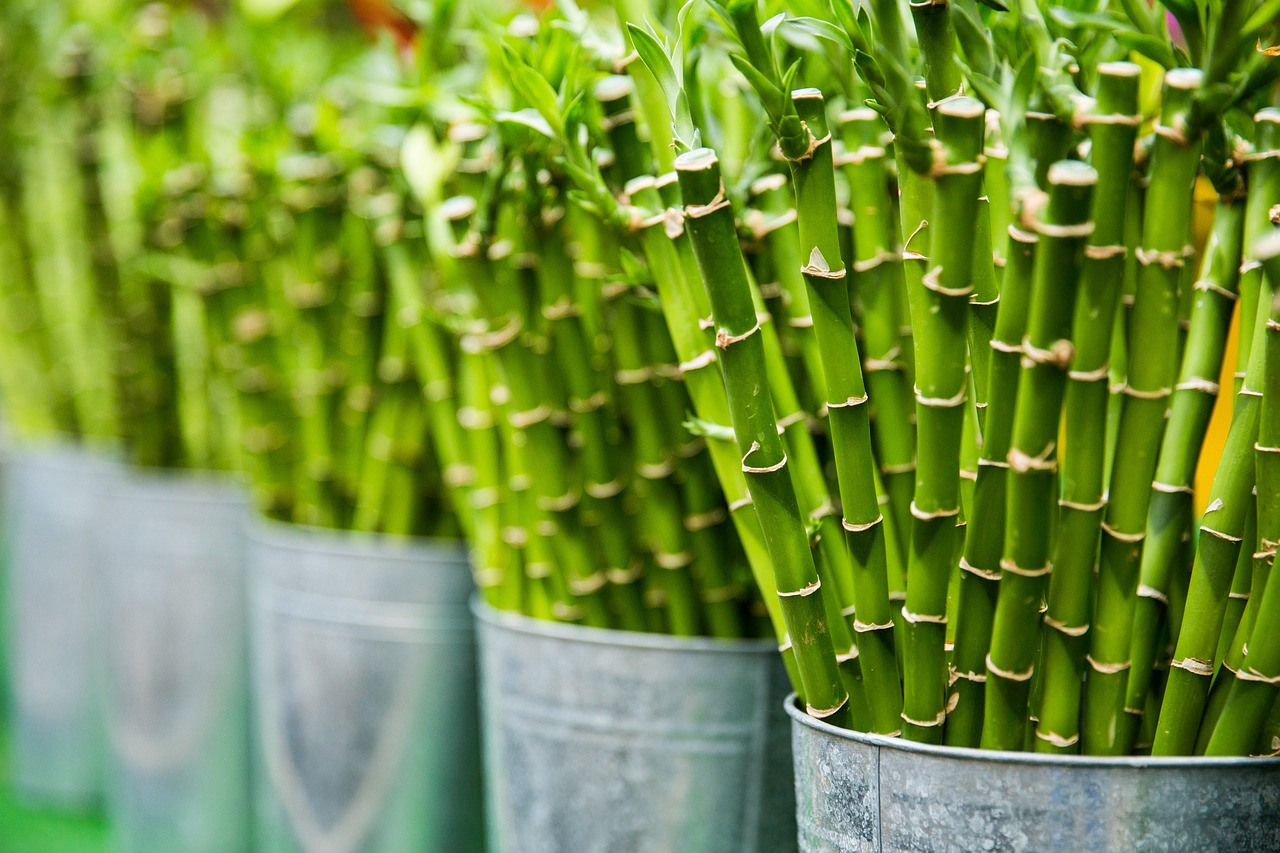 11 Best Plants For Office With No Windows (#1 Is Our Favorite)