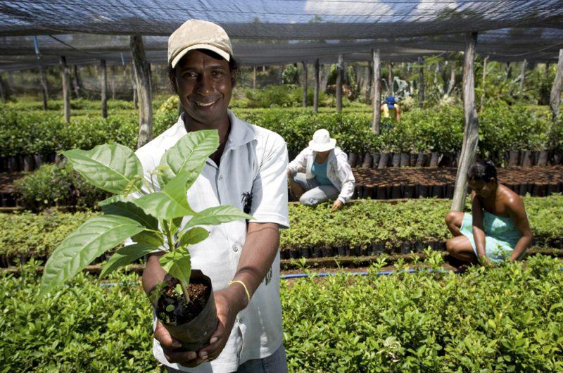 PAD aumentou a produtividade em 4% nos países em que foi aplicado. (Fonte: Fotos Públicas)