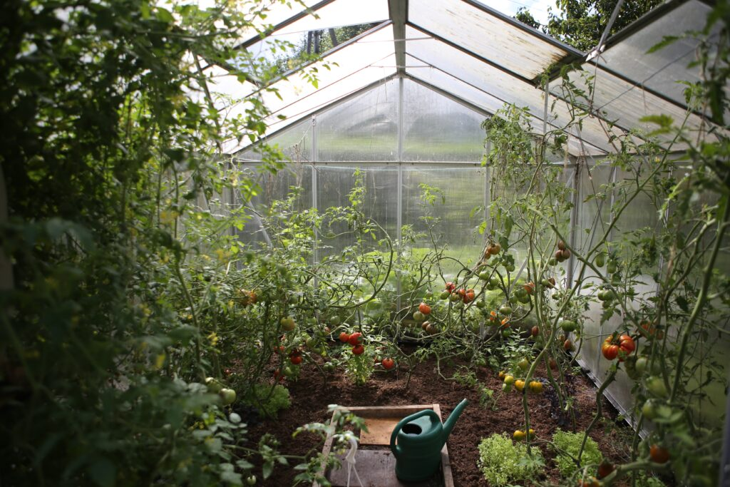 Benefits of growing your own food at home - what to grow in a greenhouse uk