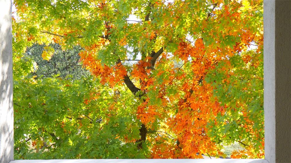 Fall Framed.jpg