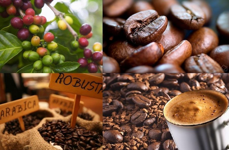 Xây dựng nét văn hóa cà phê rất riêng của người Việt