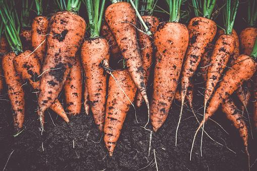 https://media.istockphoto.com/photos/homegrown-fresh-harvest-of-orange-garden-carrots-picture-id1138757396?b=1&k=6&m=1138757396&s=170667a&w=0&h=IbC5iRepjpsJV3SenQGAQVIcCjuNXzjekqWl8EYdTos=