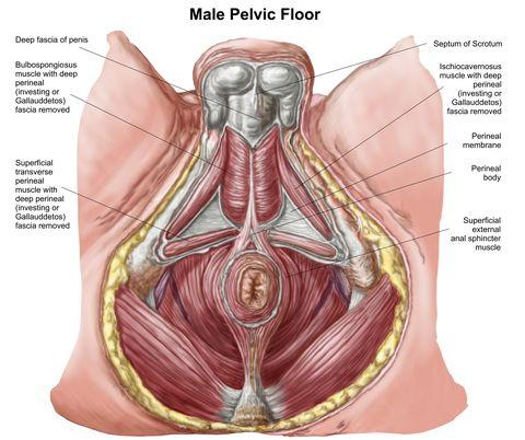 How Men Can Identify and Treat Pain from Pelvic Floor Dysfunction