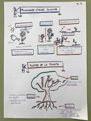 TERCERO de LA PIEDAD: VISUAL THINKING NATURALES: LAS PLANTAS
