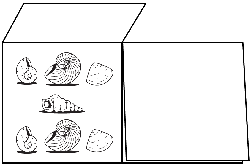 A double-flap card showing 3 rows of shells. 3 in the top row. 1 in the middle. 3 in the bottom row.