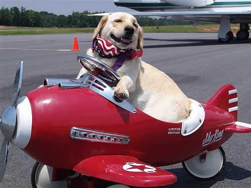 Cão avião.jpg