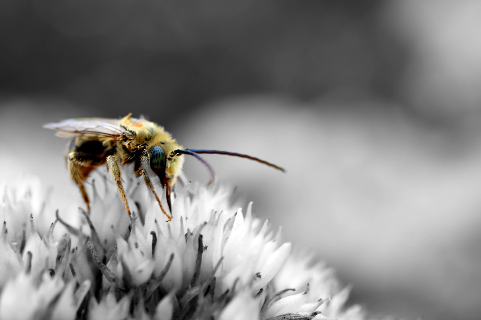 combine colored bees with monochrome flowers