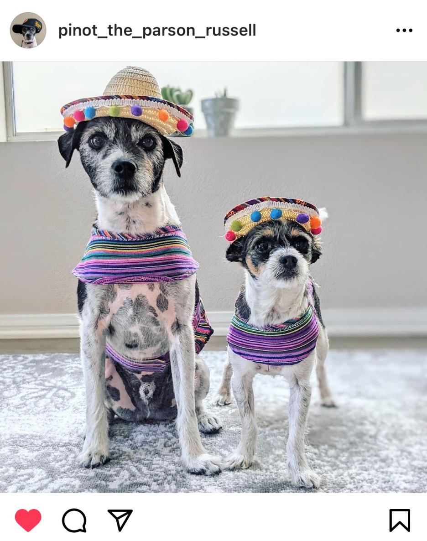 Fiesta Pups Halloween Costume Ideas For Dogs