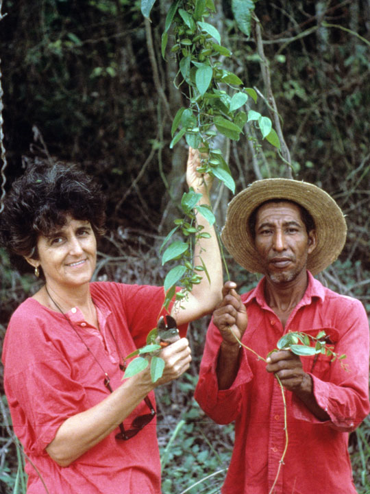 Photograph Dr. Rosita Arvigo and Polo Romero showing Dioscorea fruits in the field, from The Belize Ethnobotany Project landing page at NYBG.org.