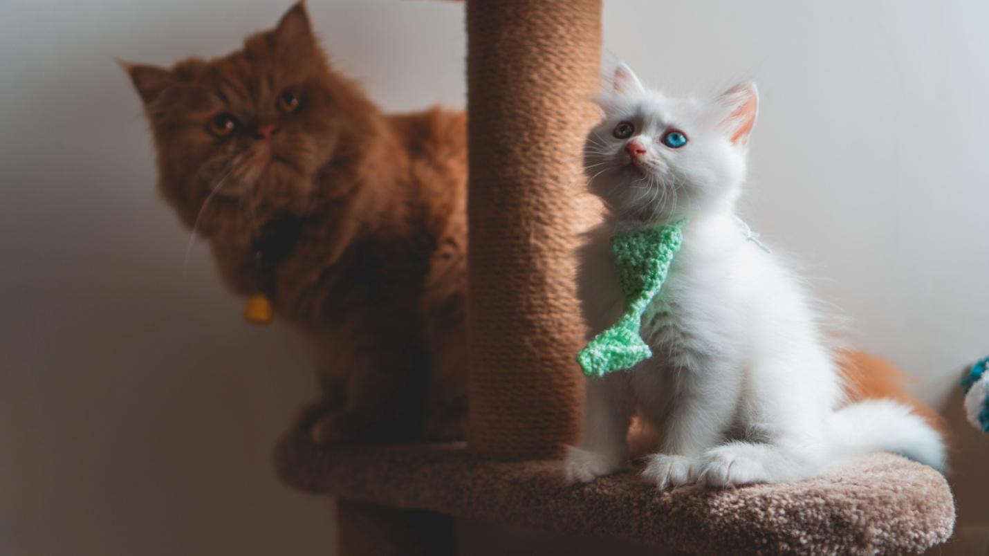 How To Choose The Best Scratching Post For Your Cat