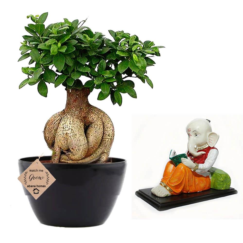 5 Bonsai Trees for Your Office Desk