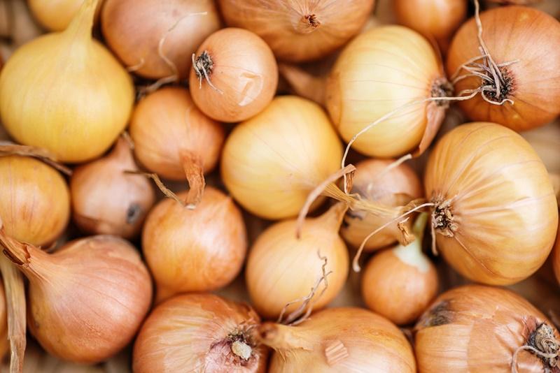 A cebola estará pronta para colheita a partir do tombamento da parte aérea da planta sobre o solo. (Fonte: Shutterstock)cebolas