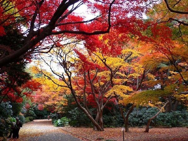 Cung đường đi bộ trên núi Takao