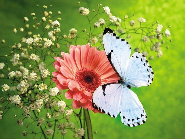 Kết quả hình ảnh cho hoa đẹp