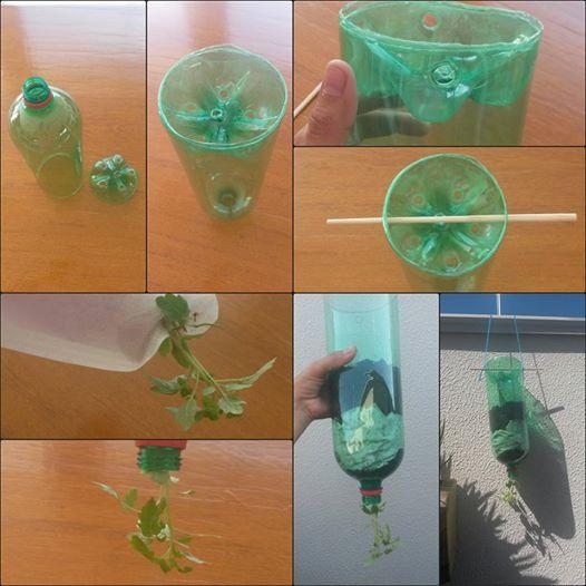 plantando em garrafa pet
