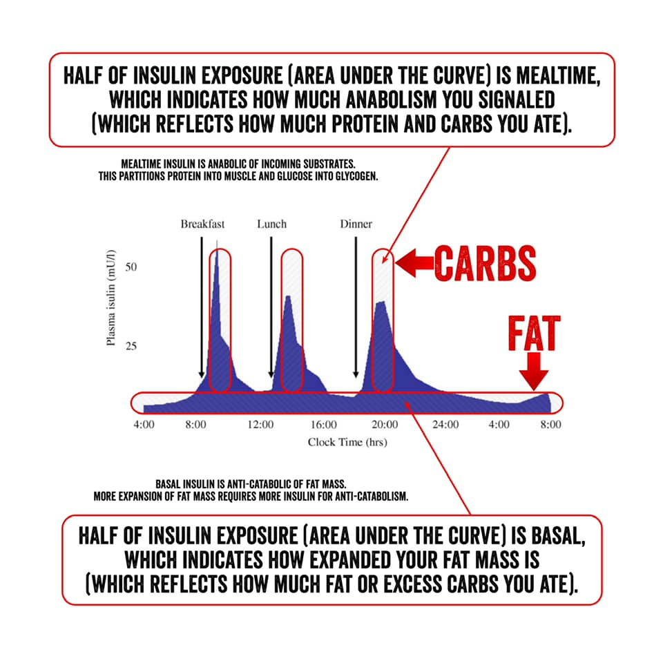 Image may contain: possible text that says 'HALF OF INSULIN EXPOSURE (AREA UNDER THE CURVE) IS MEALTIME, WHICH INDICATES HOW MUCH ANABOLISM SIGNALED (WHICH REFLECTS HOW MUCH PROTEIN AND CARBS ATE). ANABOLICOF SUBSTRATES Breakfast Lunch חם CARBS 4:00 FAT 12:00 16:00 Clock 20:00 24:00 BASAL 8:00 A -CATABOLISM. HALF OF INSULIN EXPOSURE (AREA UNDER THE CURVE) IS BASAL, WHICH INDICATES HOW EXPANDED YOUR FAT MASS IS (WHICH REFLECTS HOW MUCH FAT OR EXCESS CARBS YOU ATE).'