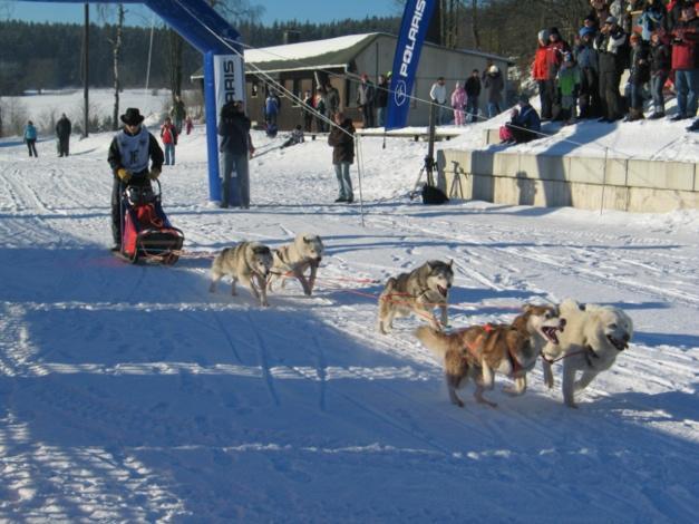 Ein Bild, das Schnee, draußen, Hund, Transport enthält.  Automatisch generierte Beschreibung