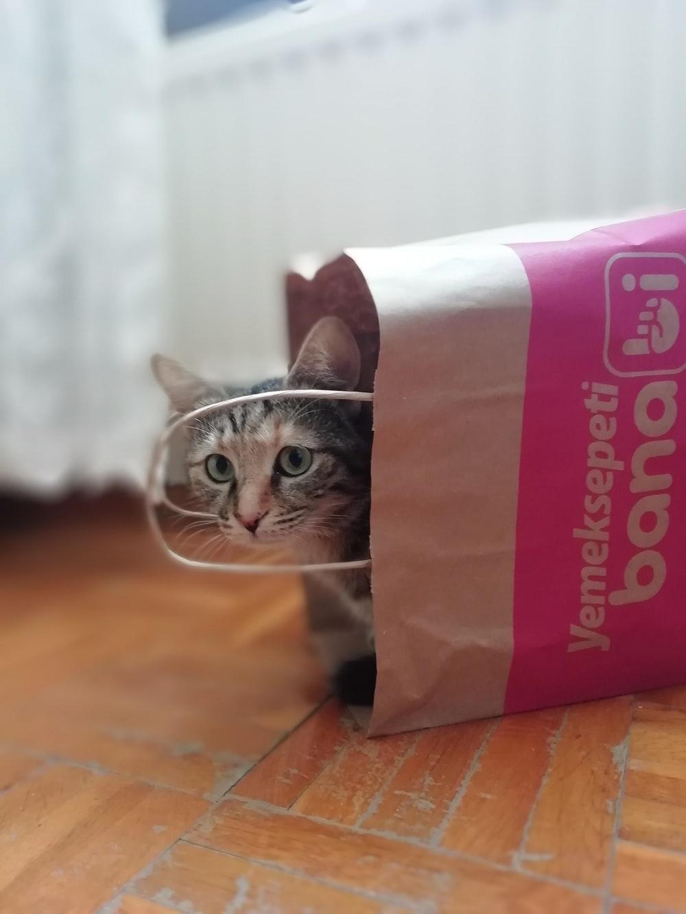 brown cat in shopping bag
