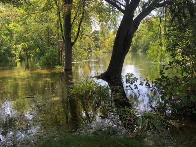 A flooded wooded area