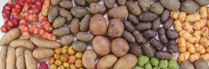 Patatas andinas