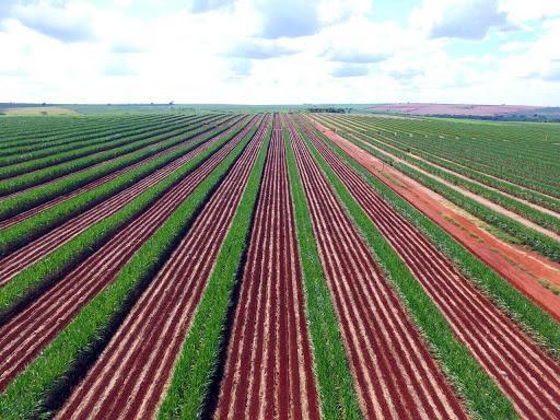 Plantio de Meiose - Agrop