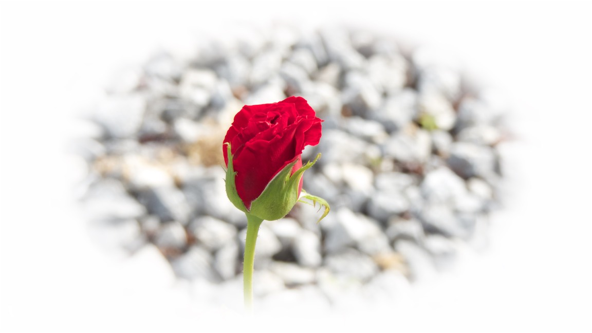 Red Bud Alone.jpg