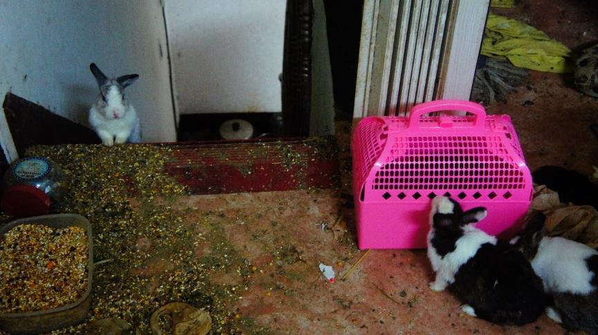 一張含有 貓, 室內, 鋪設, 地毯 的圖片  自動產生的描述