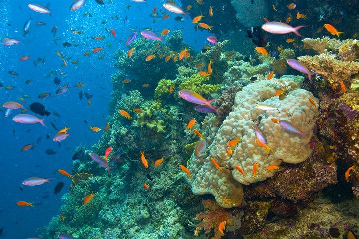 """Biodiversidade Marinha : """"Biodiversidade Marinha de Santa Catarina"""""""