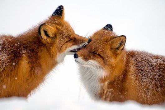 animal love 10