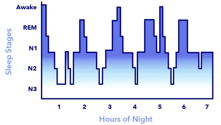 NREM and REM sleep cycles over the course of an 8 hour sleep in a young adult. Taken from Sleepopolis.