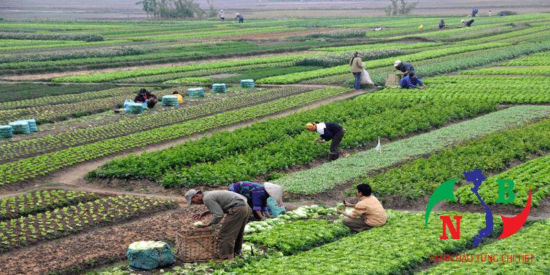 3 tiêu thức để phân loại chính sách nông nghiệp có thể bạn chưa biết