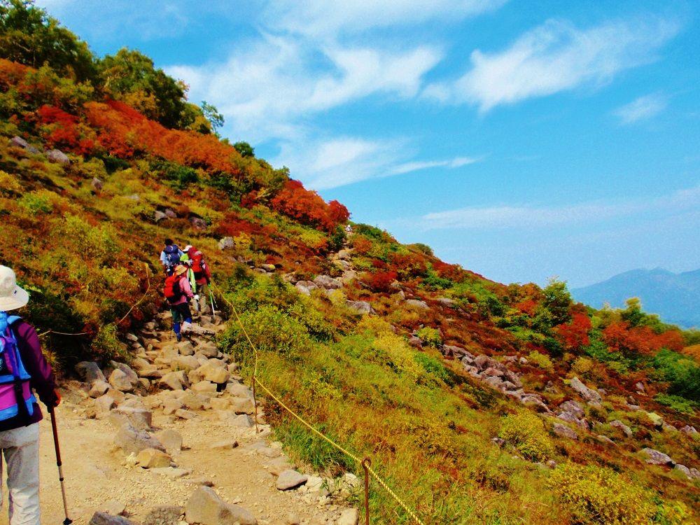 日本一早い紅葉!「大雪山国立公園」で絶景ハイキング(北海道)