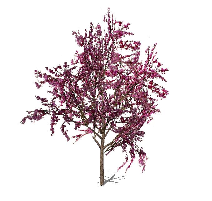 Temp'florescence – the temporal genius of plants   FormFonts 3D Models