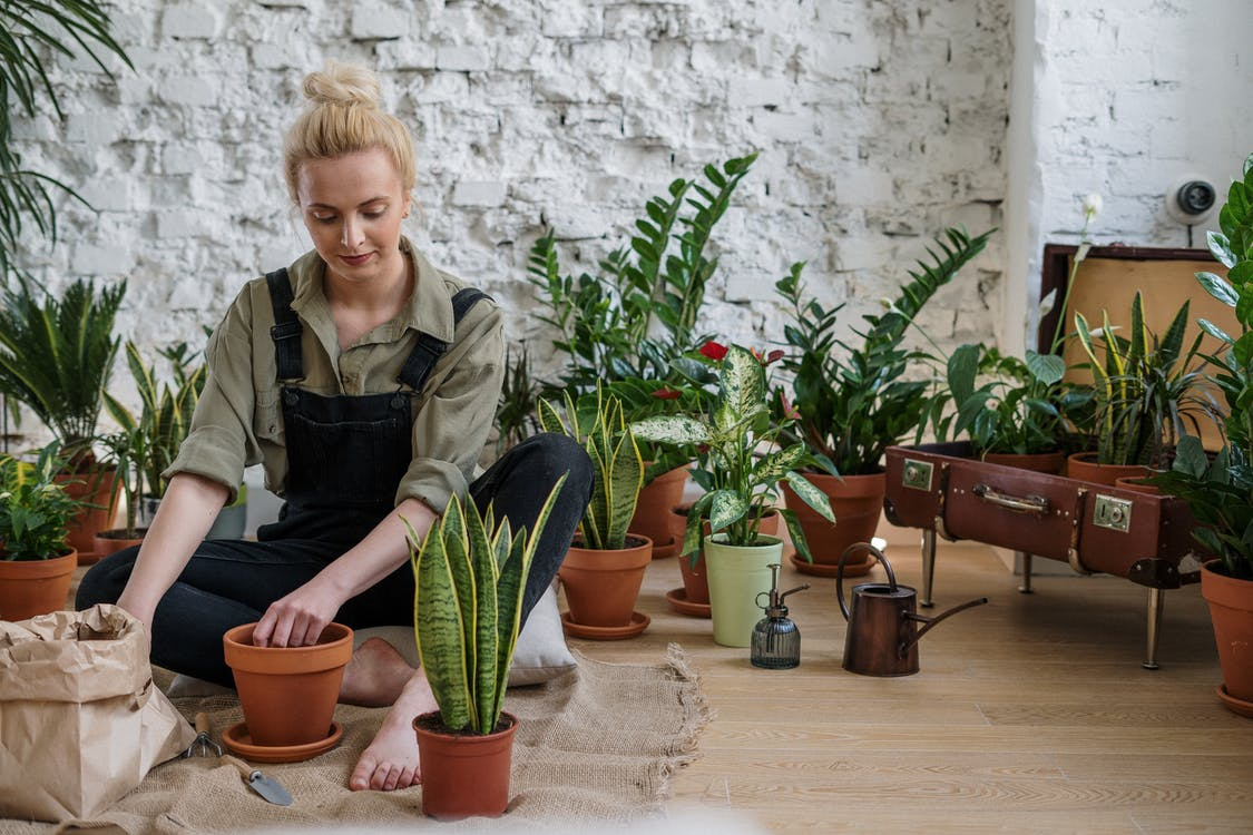 Amazing Indoor Gardening Ideas That You Should Have Known Sooner