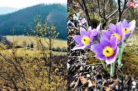 Príroda v okolí Považskej je na jar úchvatná: Vedeli ste, že…, FOTO |  Považská24.sk