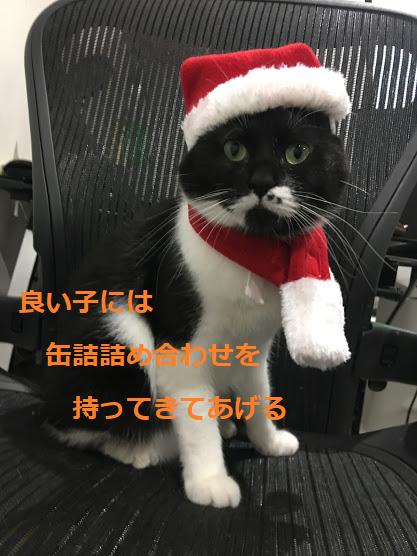 猫の誤食、誤飲に注意!クリスマスの飾りつけに気を付けたい部屋の環境