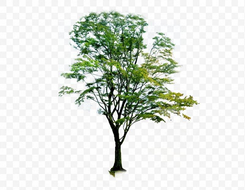 Image result for neem tree illustration