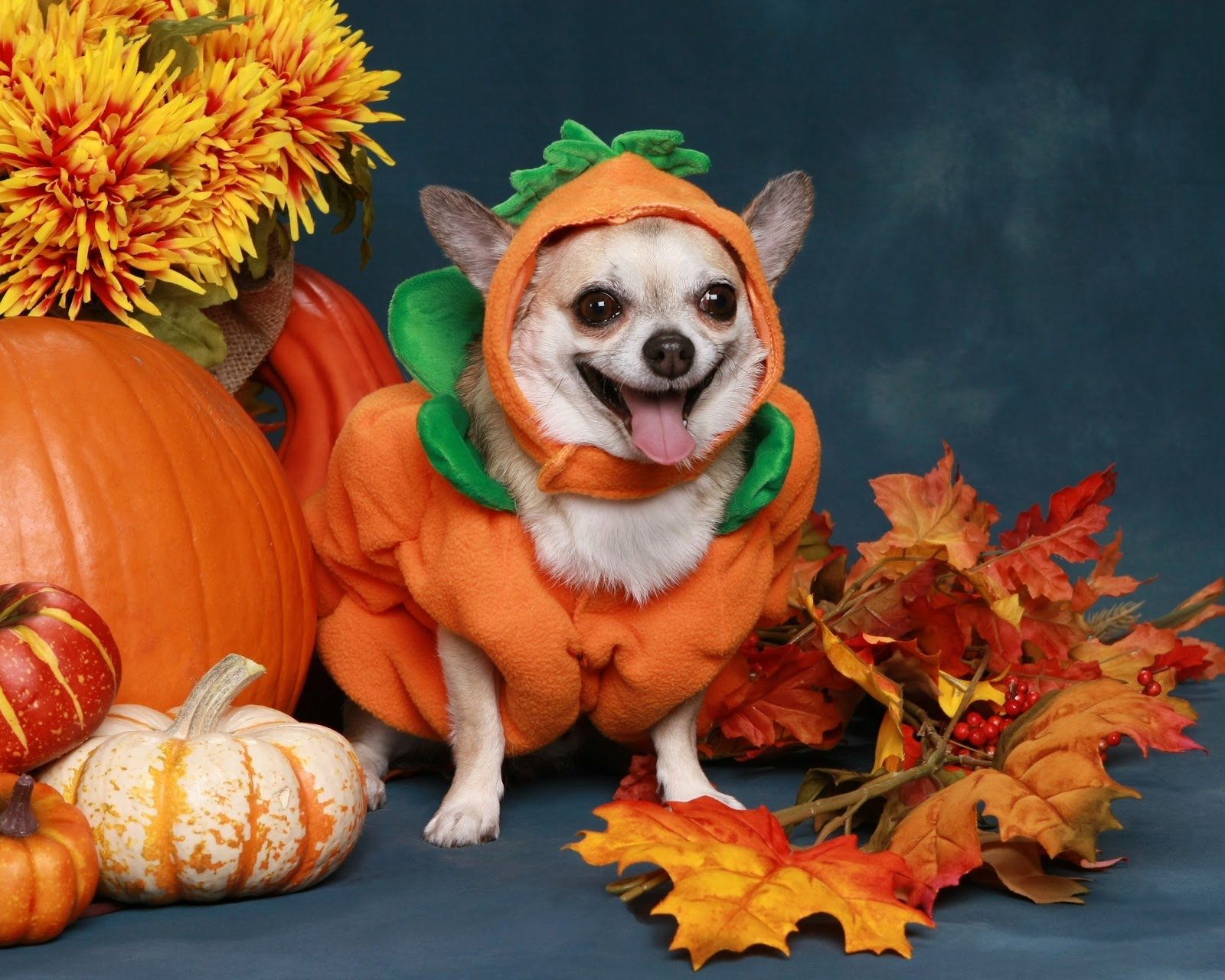 A pumpkin and a dog in a pumpkin costume
