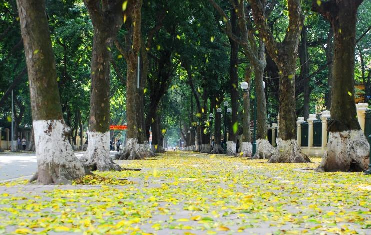Image result for con đường hà nội lá vàng