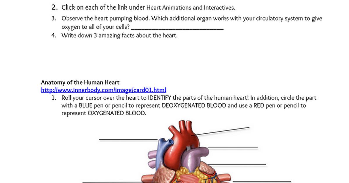 cardiovascular system webquest.docx - Google Docs