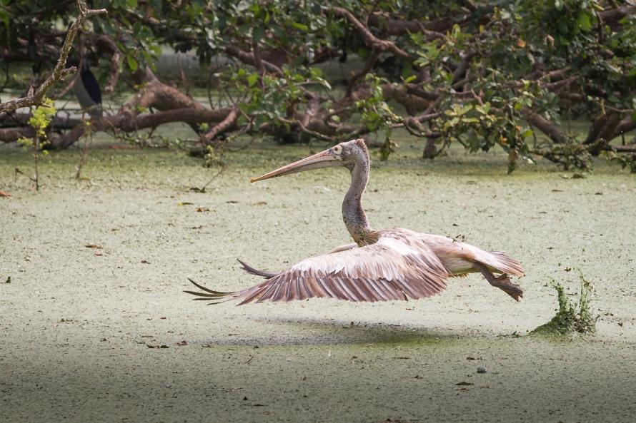 Vedanthangal bird sanctuary visit