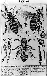 Gambar pertama Francesco Stellutti yang dibuat dengan bantuan mikroskop