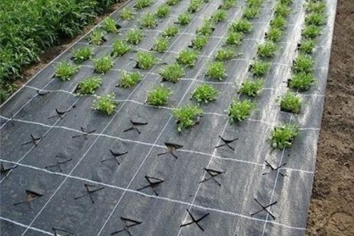 Использование укрывного материала при посадке клубники