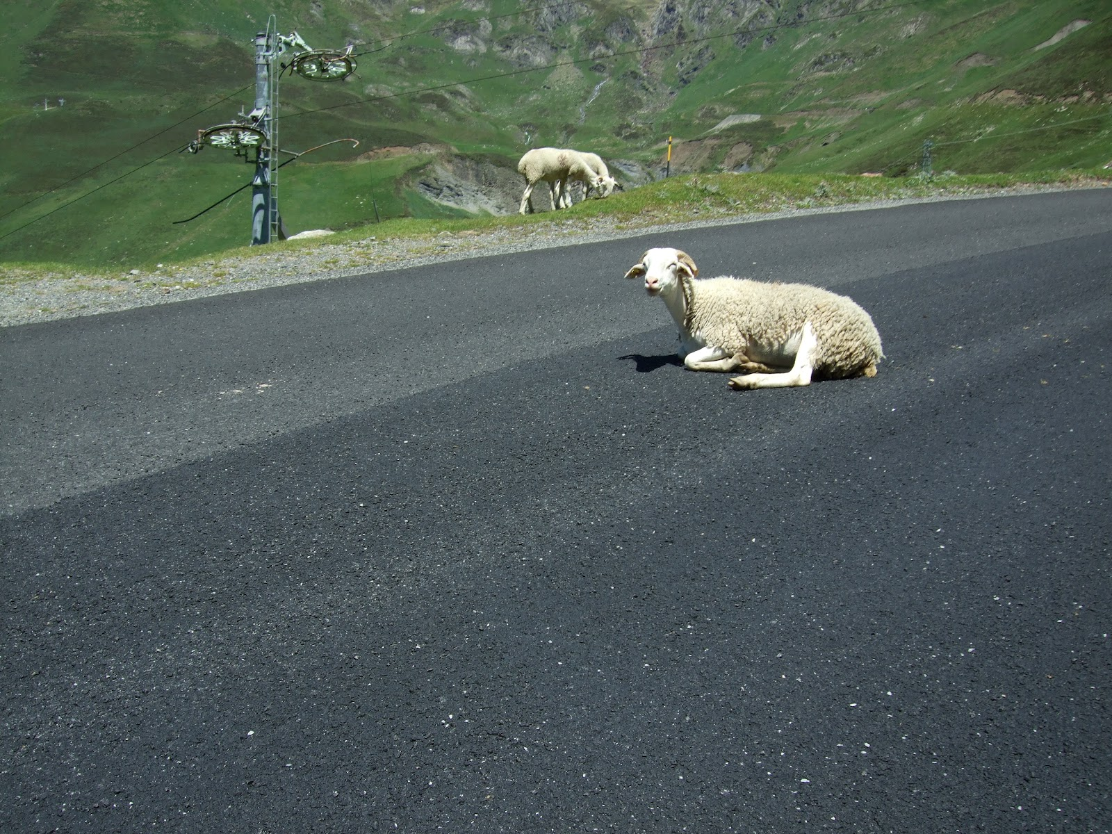 Bicycle climb up Col du Tourmalet west - sheep laying in road