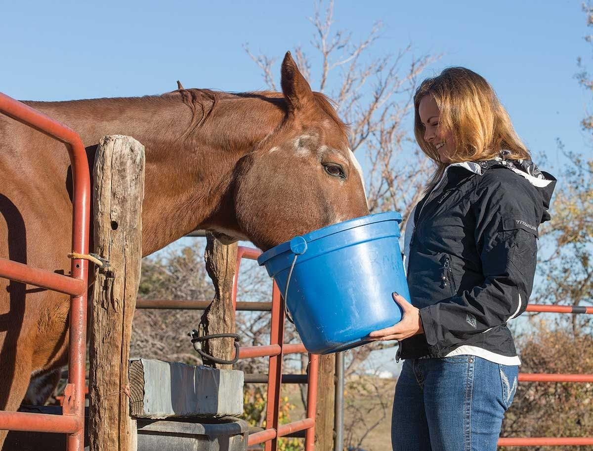Vitamins and Minerals Guide for Horses - Horse&Rider