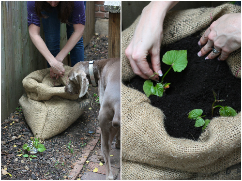 the rikrak studio: sustainable scraps: vegetable gardening ...